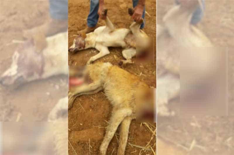 Homem que matou cachorros na região continua desaparecido, em Potirendaba, SP