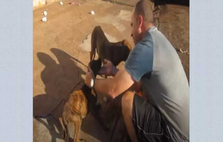Daniel Augusto Galo realiza trabalho voluntário com animais de rua em Ribeirão Preto (SP) — Foto: Reprodução/Youtube