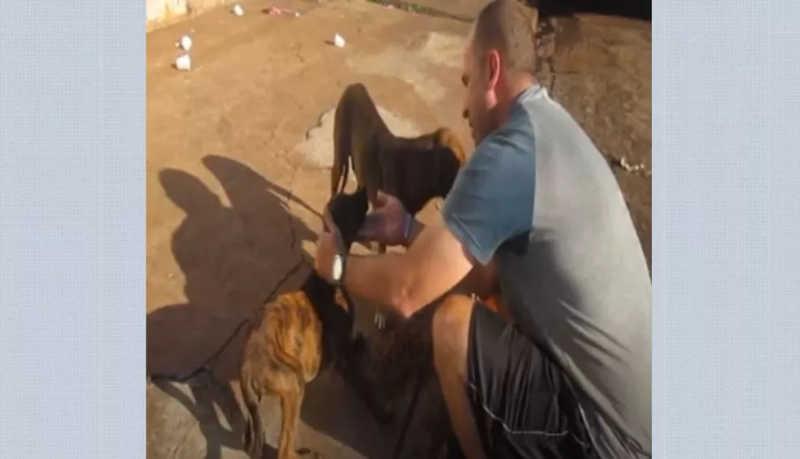 Motorista de aplicativo transporta ração no porta-malas para doar a cães de rua em Ribeirão Preto, SP
