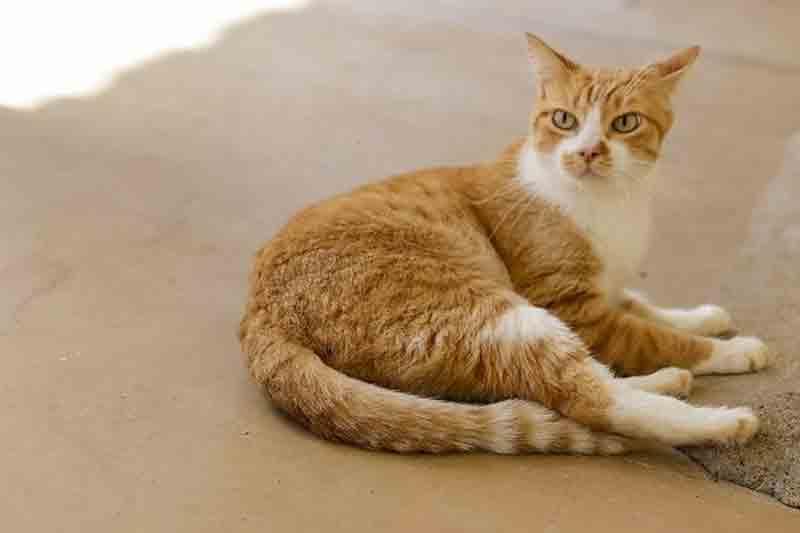 Cadastro para castração de cães e gatos será aberto na quarta-feira em Rio Preto, SP
