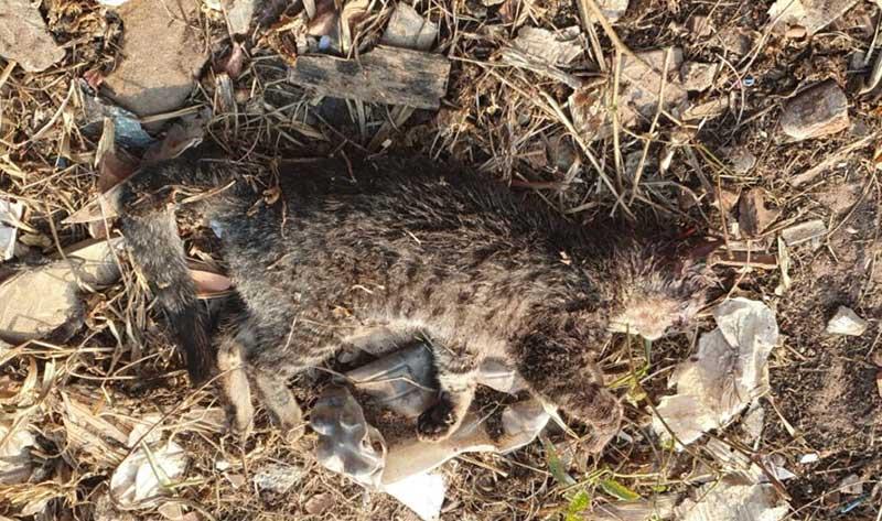 Homem mata gato de vizinha a enxadada em Rio Claro (SP) e é detido pela Proteção Animal da Guarda Municipal