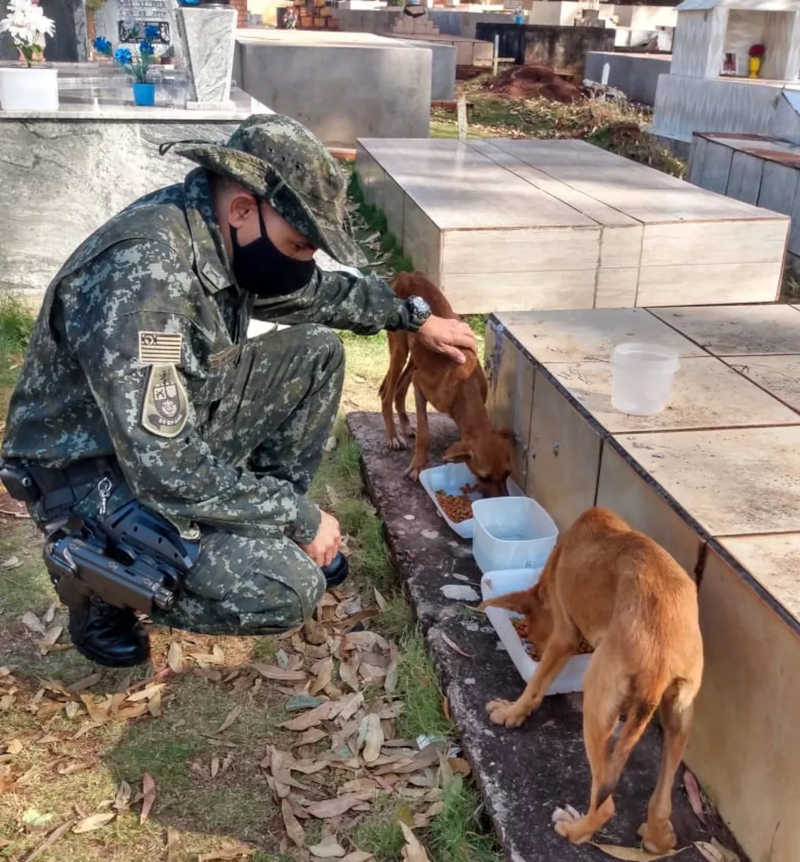 Policiais resgataram as duas cadelas que haviam sido abandonadas no Cemitério Municipal de Rosana (SP) — Foto: Polícia Militar Ambiental