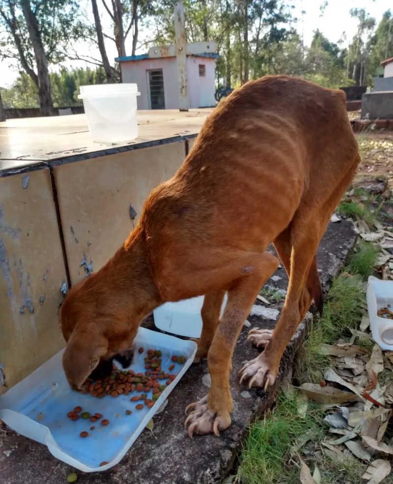 Sitiante leva multa de R$ 6 mil por abandonar cachorras sem água e alimento em cemitério