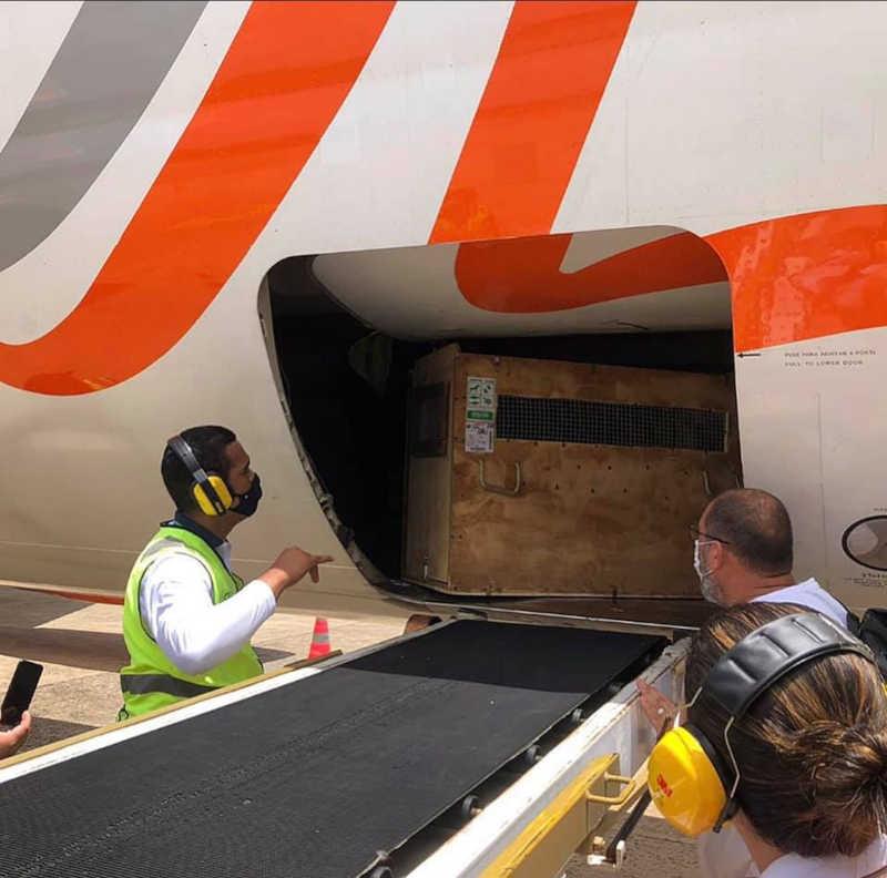 Animal foi transportado em avião — Foto: Divulgação/Infraero