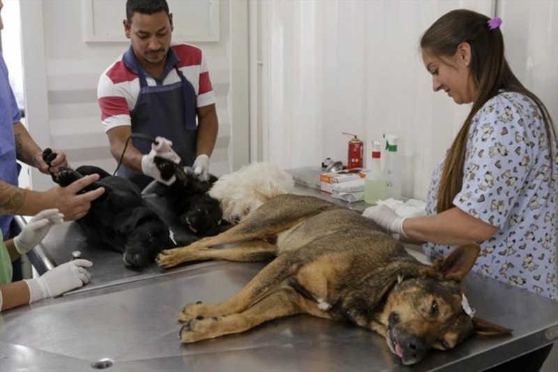 Araras (SP) retoma a castração gratuita de cães e gatos de famílias de baixa renda