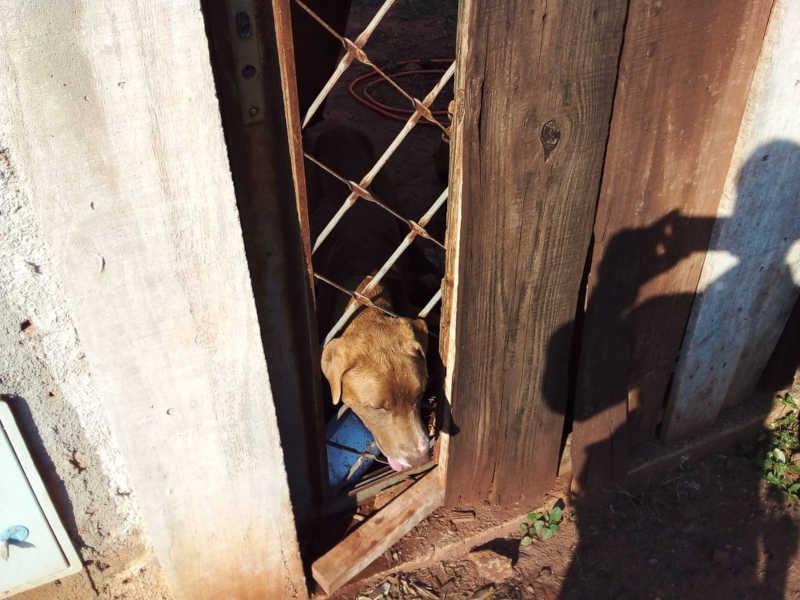 Após abandonar cães à própria sorte, homem recebe multa de R$ 6 mil em Teodoro Sampaio, SP