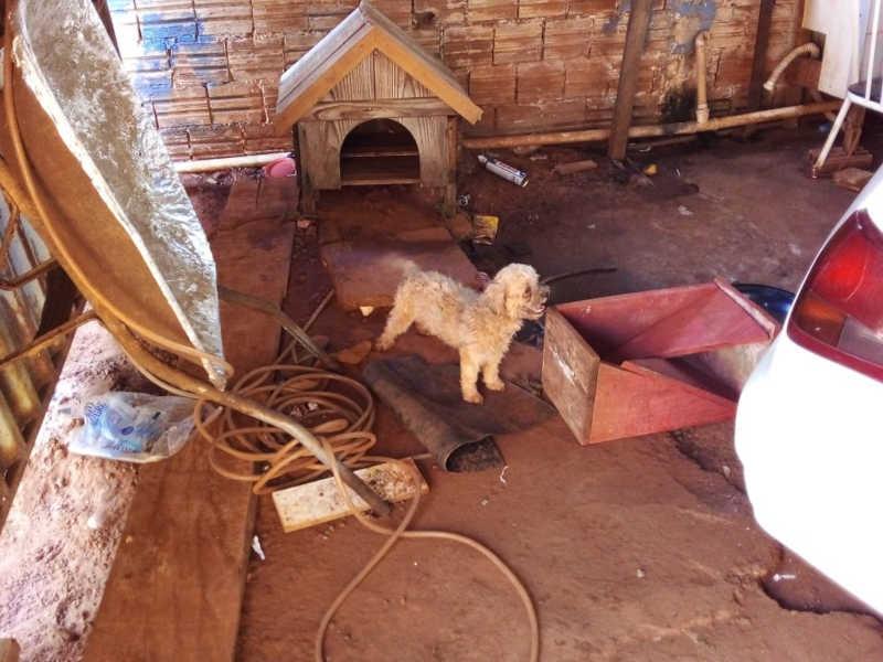 Cães foram deixados sozinhos por dias em uma casa, amarrados, sem alimentação e sem água — Foto: Polícia Ambiental