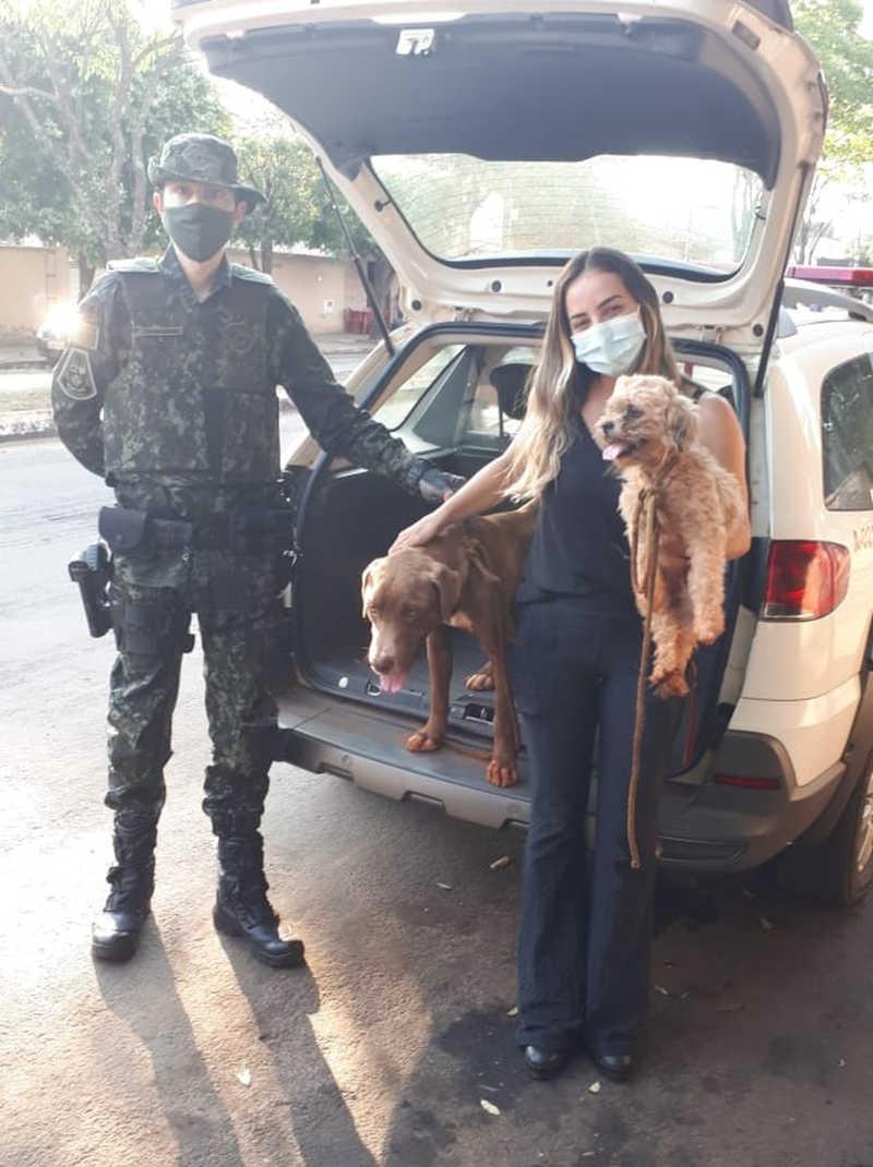 Cães foram resgatados e levados a um ONG da cidade — Foto: Polícia Ambiental