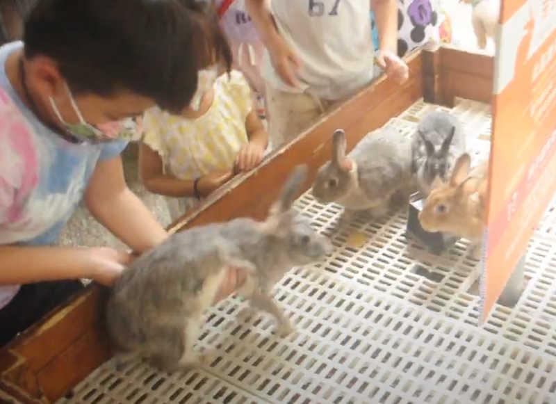 Os visitantes manipulam os coelhos no rancho. / Foto da Taiwan Animal Equality Association
