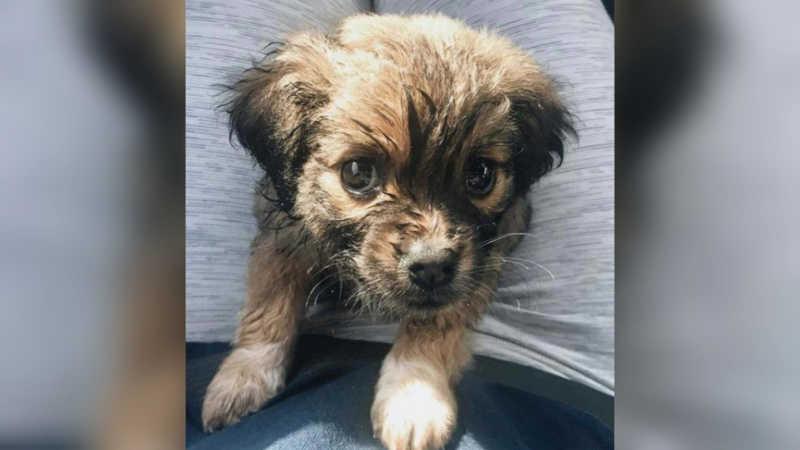 Tilly é um cachorrinho que nasceu com a síndrome da coluna curta e foi adotado para receber muito amor. (Foto: Arquivo Pessoal)