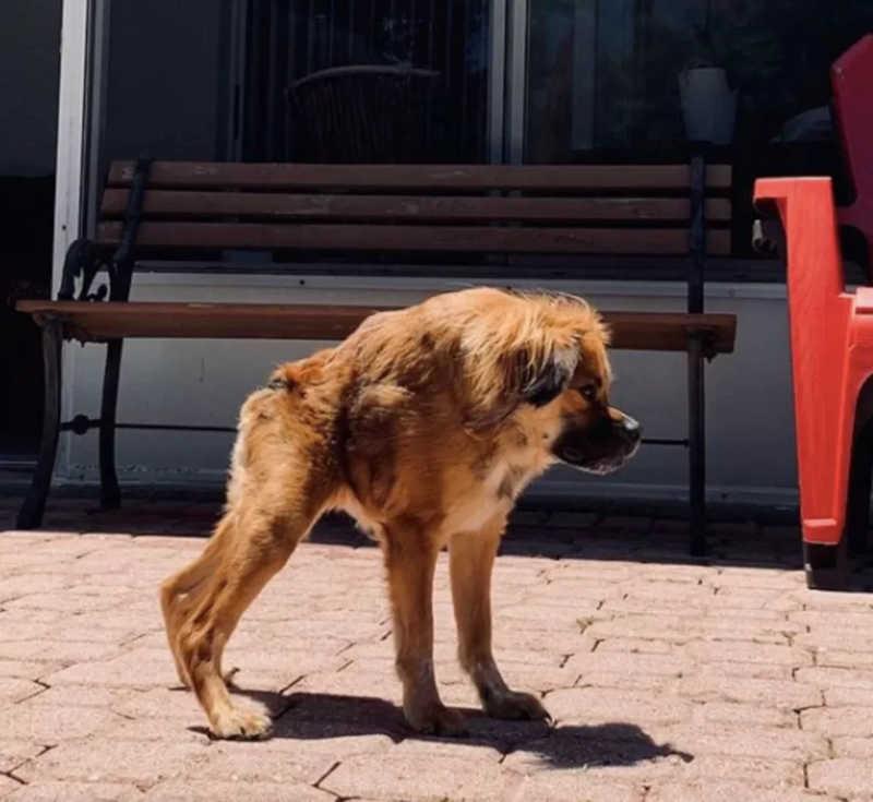 Cachorrinho não percebe que é especial e vive com muito amor. (Foto: Arquivo Pessoal)