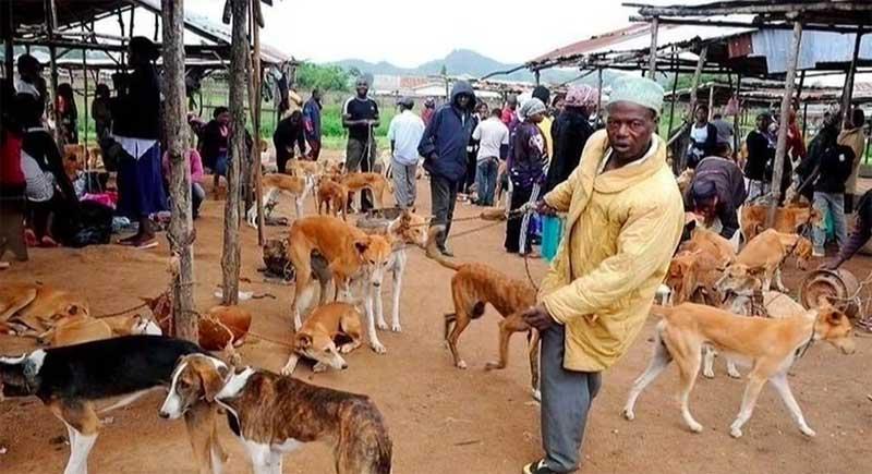 """""""O governo recebeu uma petição para proibir o comércio e o consumo de carne de cachorro e gato."""""""