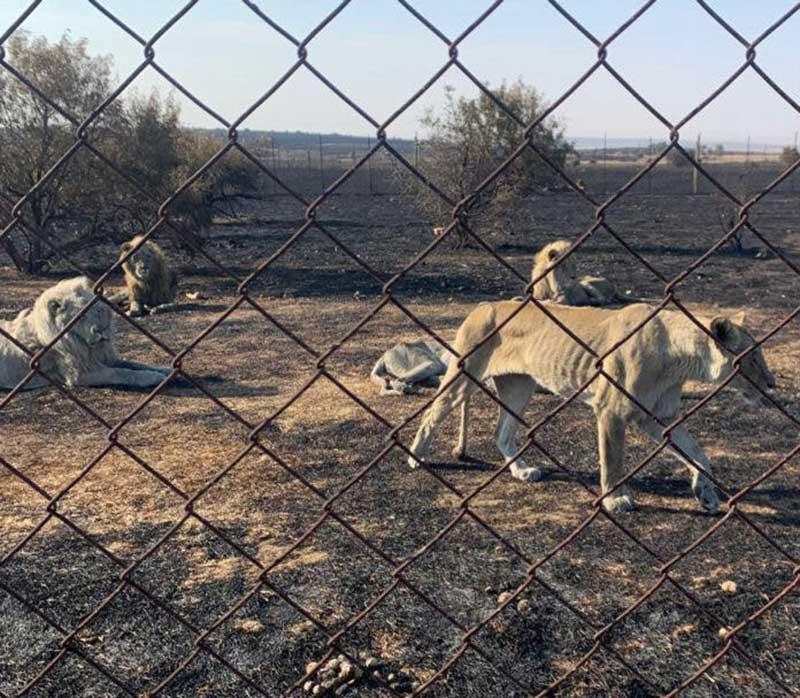 Foto: Bloemfontein SPCA