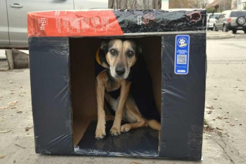 Termina com êxito a campanha para proteger os cães de rua do frio na Argentina