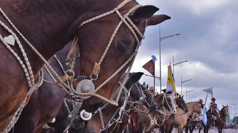 Os equinos sofrem cansaço intenso, desidratação e lesões graves, conforme indicaram as organizações protecionistas.