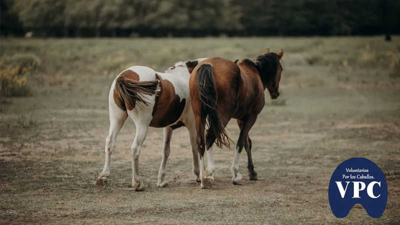 O campo onde vivem os cavalos resgatados e recuperados pela ONG Voluntarios por los Caballos.