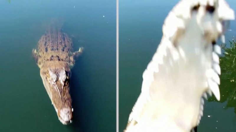Crocodilo é perturbado e ataca drone em pleno voo; veja