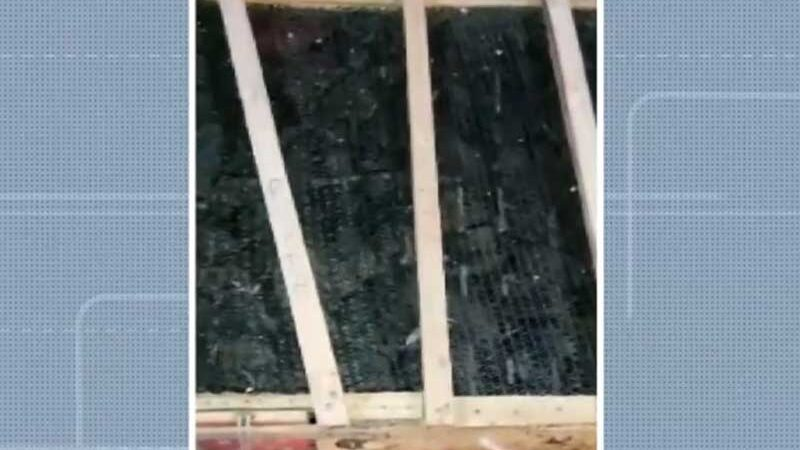 Aves estavam amontadas em caixotes de madeira em porta-mala de veículo na cidade de Rio do Antônio, sudoeste da Bahia — Foto: Reprodução/TV Bahia