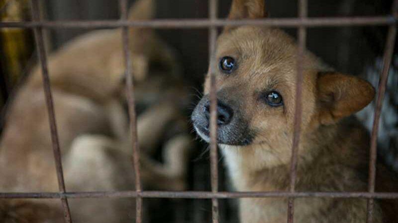 Diversas raças de animais se encontravam aprisionadas no local. Foto: Humane Society International
