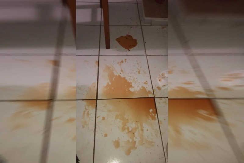 O cachorro urinava sangue - Material cedido ao Metrópoles