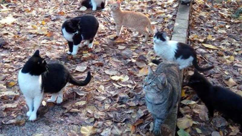 """Os defensores de animais buscam """"o reconhecimento e manejo ético das colônias felinas pelas administrações competentes"""". Crédito: Terceiros"""