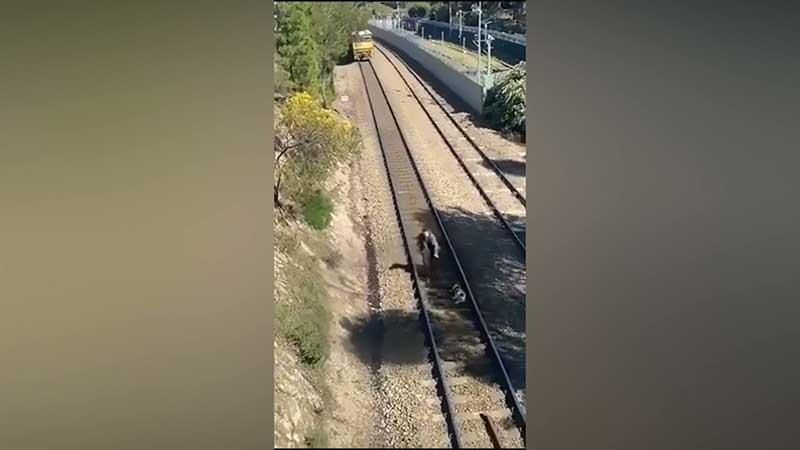Vídeo: homem se arrisca para salvar cão preso em trilho no instante em que trem passava