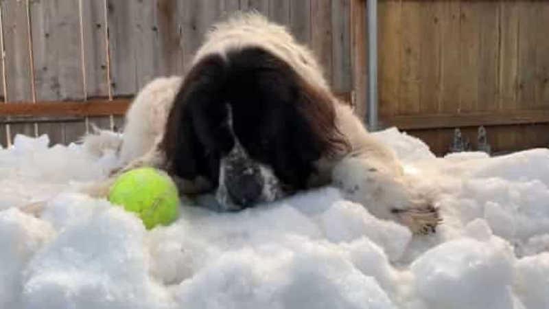 Rinque de gelo oferece neve a cadela doente para brincar uma última vez