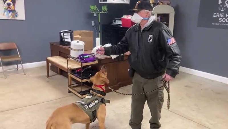 Homem condenado à prisão e proibido de ter animais de estimação por esfaquear cão que ele disse ser 'muito velho'