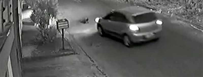 Vídeo: motorista atropela cachorro em rua de Anápolis, GO
