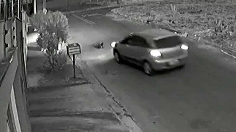 Polícia identifica motorista que atropelou cachorro em Anápolis. Foto: Reprodução
