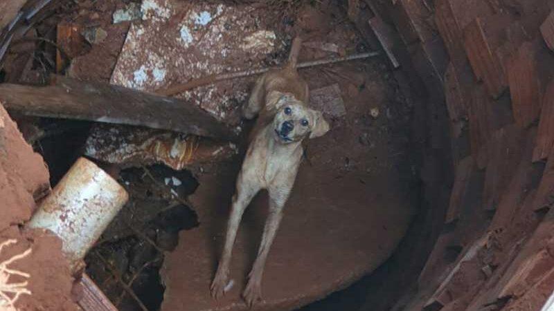 Cachorro que caiu em fossa surpreende bombeiros e ajuda no próprio resgate em Goiás — Foto: Reprodução/TV Anhanguera
