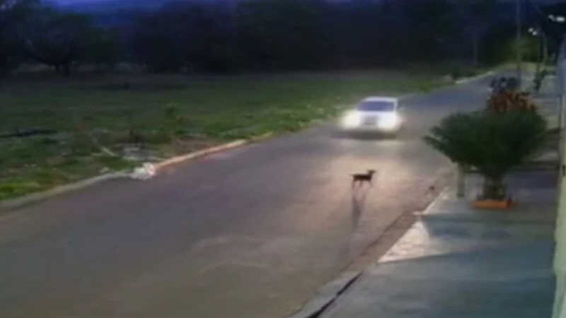 Cachorro é atropelado de forma proposital em Anápolis (GO) - Reprodução
