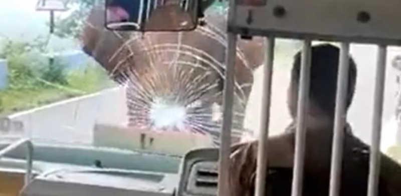 Imagens impactantes: um elefante bate com força em um ônibus e destrói o para-brisa