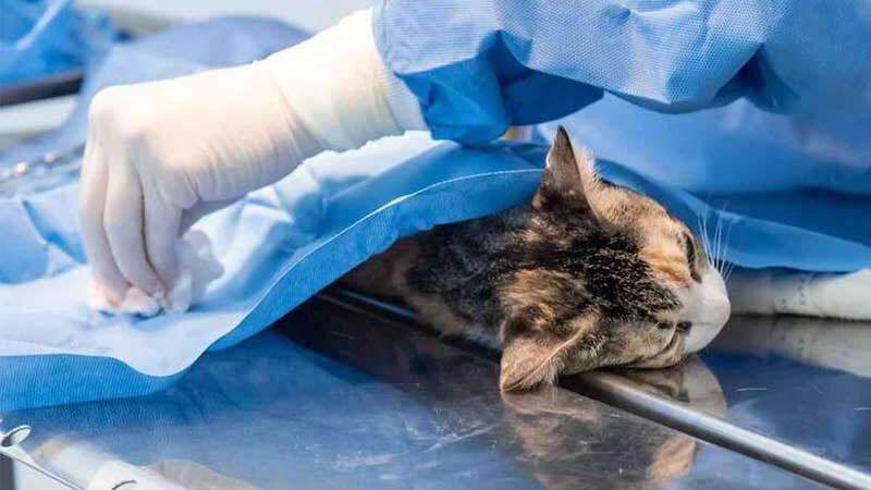 Castração ajuda a evitar superpopulação de cães e gatos. Serviço será feito em animais resgatados por ONGs (foto: Luci Sallum/Prefeitura de Contagem)