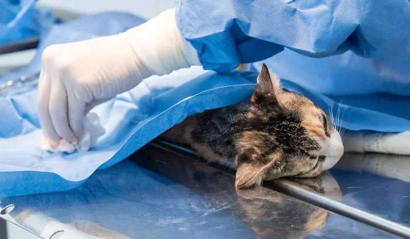 Dois anos depois, Contagem (MG) retoma castração; fila chega a 18 mil animais