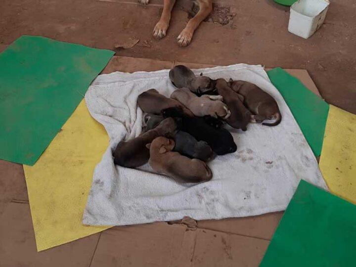 Cadela pariu 10 filhotes e está no estacionamento da papelaria — Foto: Wanderson Pereira Campos/ Arquivo pessoal