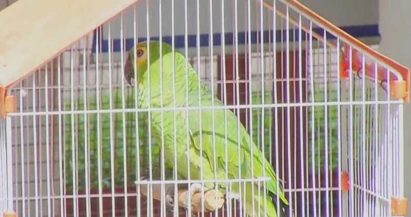Aves silvestres são apreendidas em Sacramento — Foto: TV Integração/Reprodução
