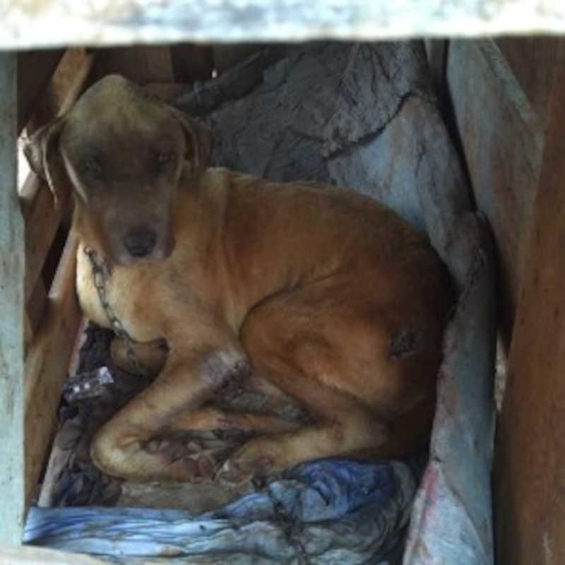 Cadela é encontrada abandonada e tutor é notificado por maus-tratos em Caarapó, MS