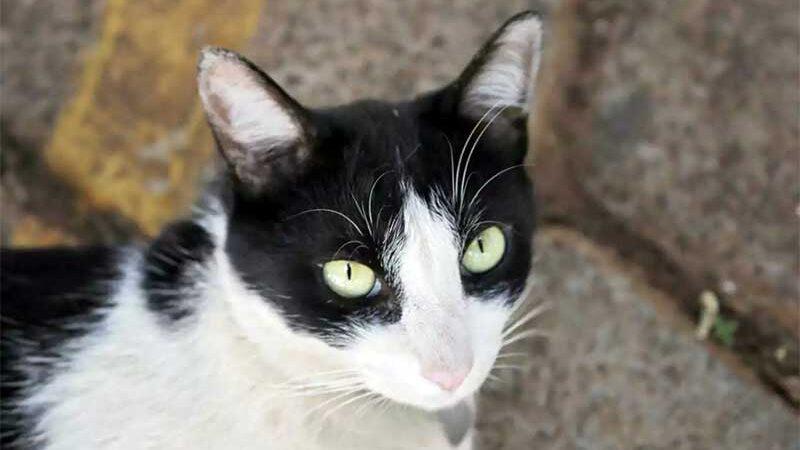Gato está há 4 anos no condomínio. (Foto: Paulo Francis)