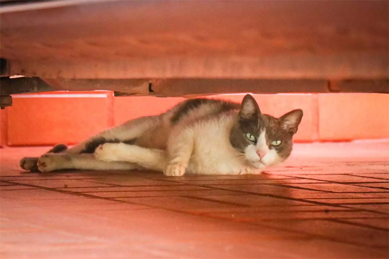 Animal comunitário é lei, mas condomínios não adequaram estatutos