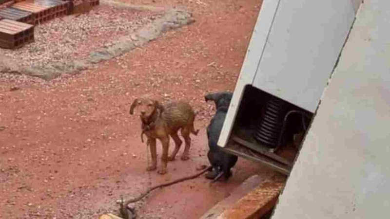 Tutores são presos após deixarem sete cães na chuva e sem comida em MS