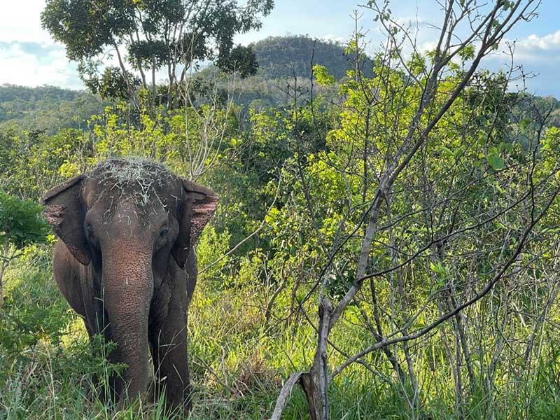 Elefanta Lady no Santuário de Elefantes — Foto: SEB/Divulgação