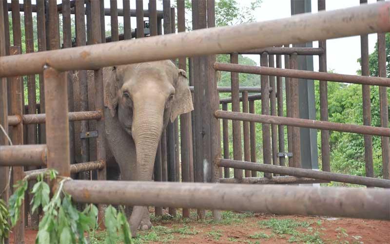 Elefanta Maia vive no Santuário desde 2016 — Foto: Carolina Holland/G1