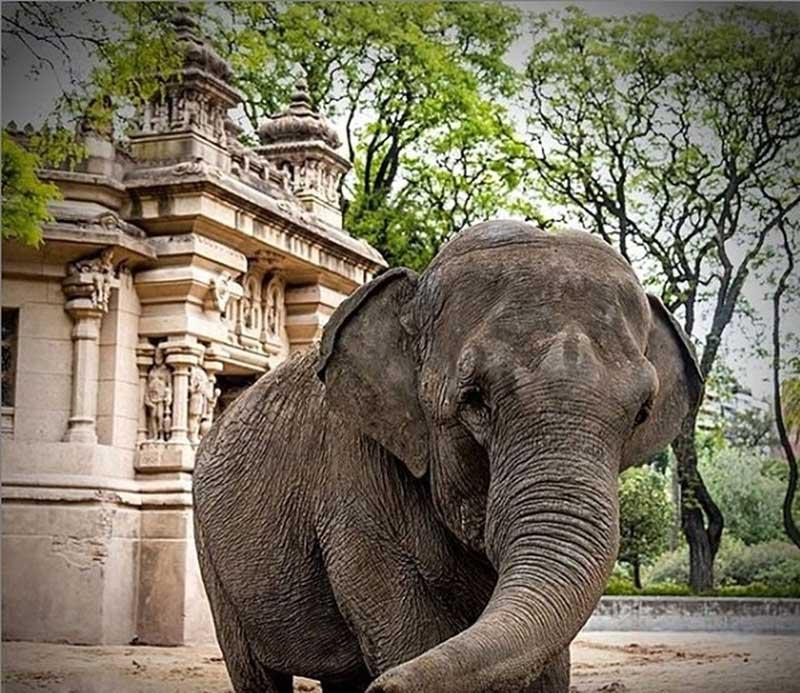 Mara vive no Santuário dos Elefantes desde maio do ano passado — Foto: Santuário dos Elefantes do Brasil