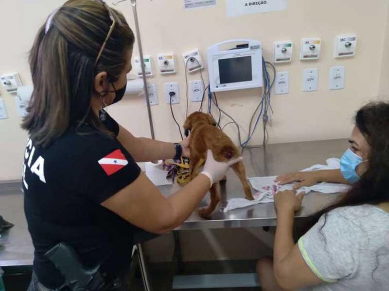Polícia Civil prende homem por maus-tratos a cachorro, em Belém, PA
