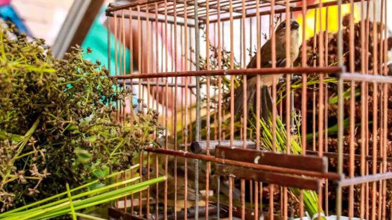 9 pássaros foram encontrados em situação de maus tratos. — Foto: Ascom Polícia Civil