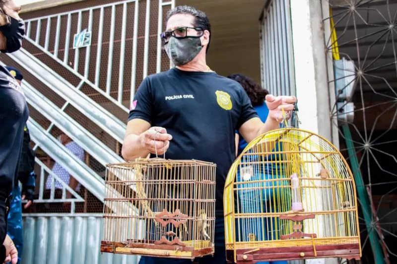 Operação fiscalizou feiras da região metropolitana de Belém. — Foto: Ascom Polícia Civil