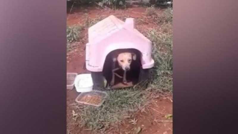 Cão é abandonado com casinha em estrada de Apucarana, PR; veja