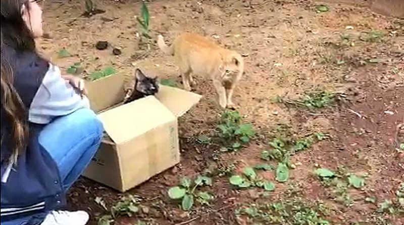 Psicopata em ação no Jardim Tarobá, em Foz do Iguaçu, PR: 10 gatos morrem envenenados