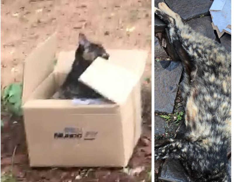 À direita, o gato como foi encontrado, na calçada. Depois, na caixa que Larissa providenciou. Fotos: Larissa Mardurkiewicz